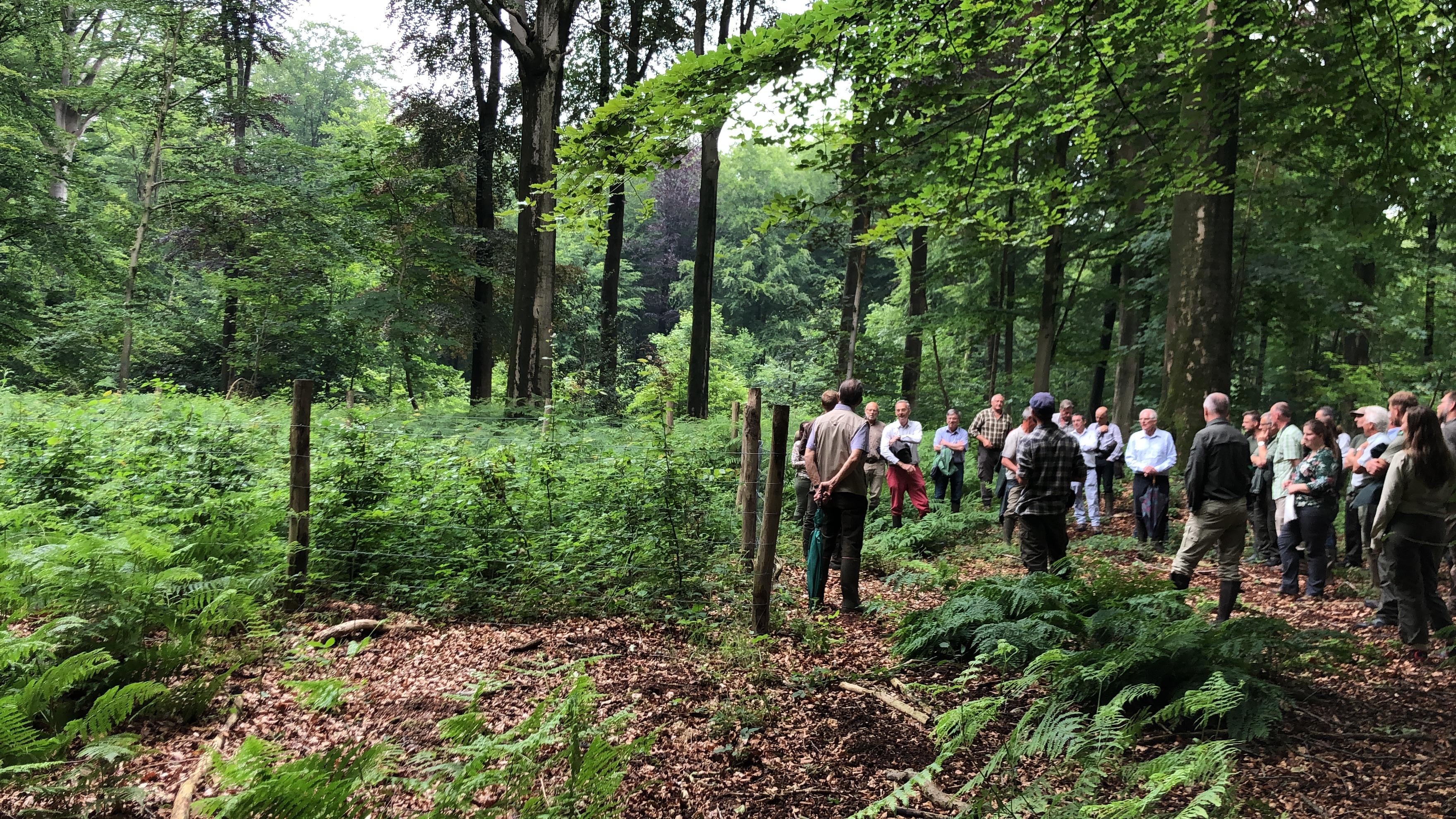 Après-midi d'information : équilibre forêt/gibier